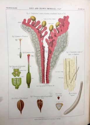 The Botanical Atlas: a Guide to the Practical Study of Plants Containing Representatives of the Leading Forms of Plant Life